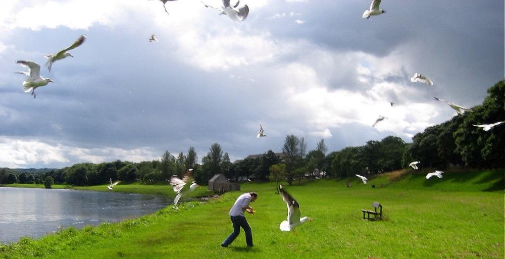 The Seagulls - Original