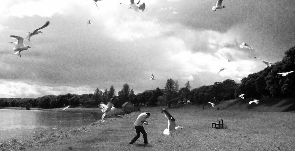 The Seagulls - Agatha