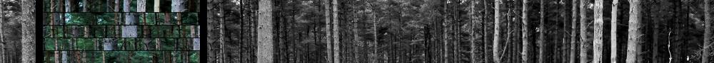 Trees - Max Ingrid
