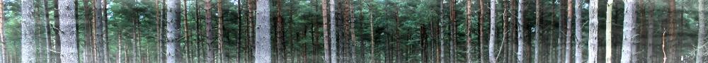 Trees - Smokey Ingrid