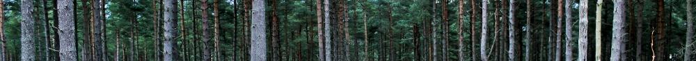 Trees - Ingrid