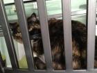 Pussy Cat prison...