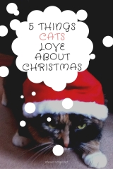 5 Things Cats Love About Christmas