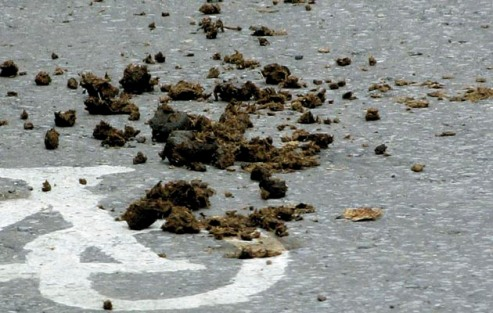 Manure in road