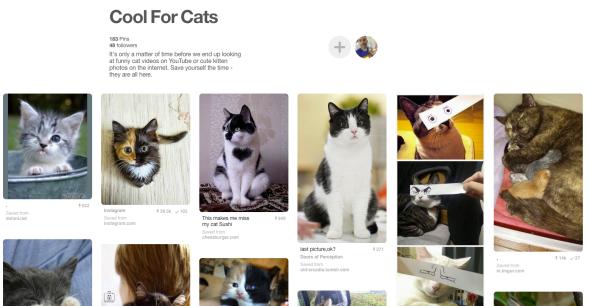 Cats On Pinterest